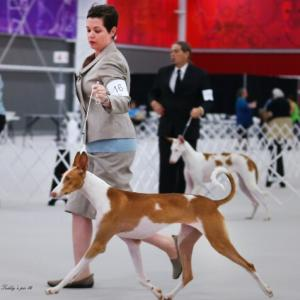 13 month old Mabel at the 2014 IHCUS National
