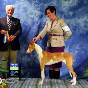 Mabel's Best of Breed win at her second show (6 months and 4 days old)